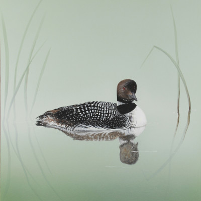Loon in the Reeds