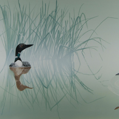 Loons in the Mist