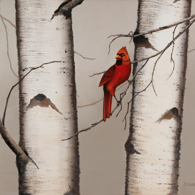 Red Cardinal and Birch