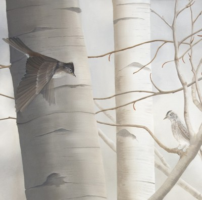 Western Wood-Pewee and Birch